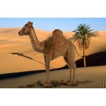 Dromedary Camel (mechanical)