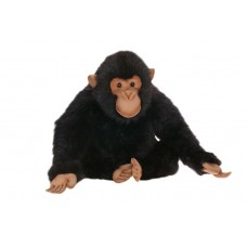 Adult Chimp