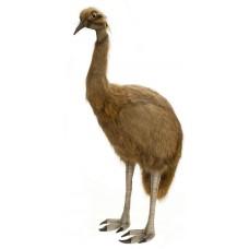 Emu Life Size