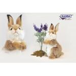 Carmel Bunny Baby