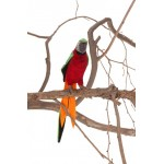 Parrot Red And Green