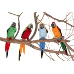 Parrots Assorted