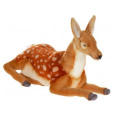 Deer Laying Down