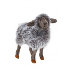 Black Sheep Kid