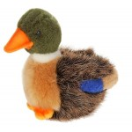 Duck Mallard  Baby