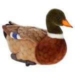 Duck Mallard  Mama