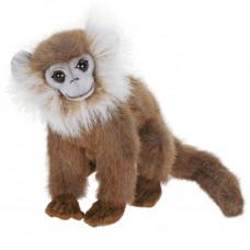 Gray Leaf Monkey