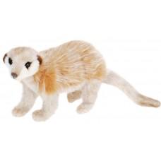 Meerkat On All Four Feet