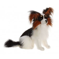 Black Papillon Dog