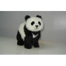 Panda Bear Cub Standing