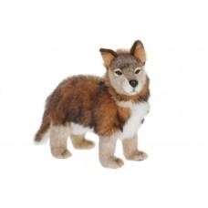 Wolf Cub Standing