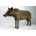 "Boar Wild Life Size 57""L"