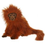 Golden Tamarin Lion