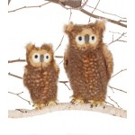 Owl Brown Adult on Right