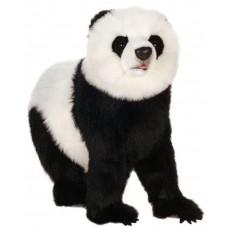 Panda Bear On All Four Feet