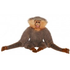 Gibbon With Long Arms