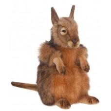 Kangaroo Hare Wallaby