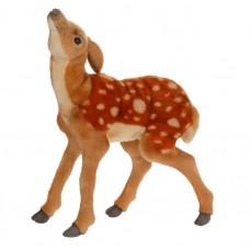 Bambi Newborn