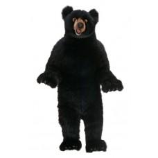 Black Bear Fritz