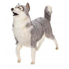 Gray Husky Dog Life Size