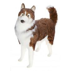 Husky Dog Life Size