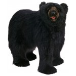 Black Bear Life Size Walking