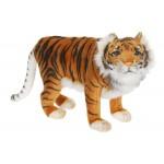 Caspian Tiger Medium