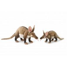 Adult Aardvark