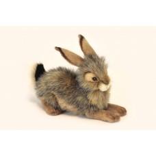Bunny Crouching