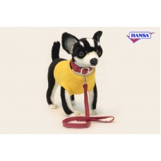 Black Chihuahua w/ Coat & Leash