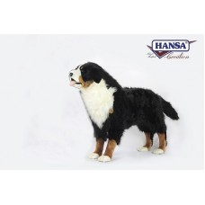 Bernese Mountain Dog Standing