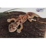 Gecko Pibora Knob Tailed