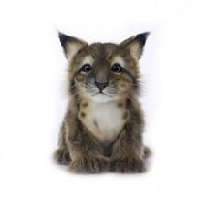 Lynx Cub Series